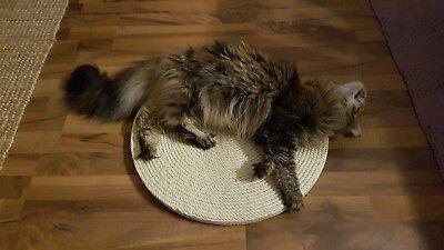 Günstiges Kratzbaum Katzen Sisal Seil  Ø 6, 8, 10 mm -  Länge nach Wahl 5