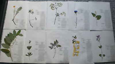 Pflanzen AUSWÄHLEN Herbarium Pflanzensammlung; 20 gepresste bestimmte