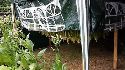 7x1000 Tabaksamen 7 Sorten  Virginia Burley Orient  Tabakpflanzen Tobacco Seeds 10