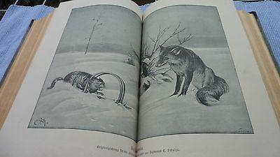 Deutsche Jäger Zeitung,Deutsche Forst Zeitung,Das Schießwesen , Jan-März 1897 7