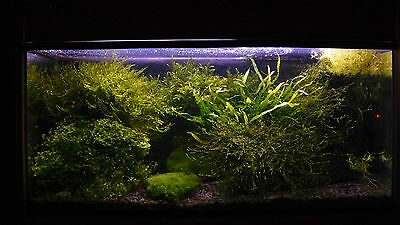 20 KG NATURAL BLACK AQUARIUM SUBSTRATE(SAND - GRAVEL 1-3mm) IDEAL FOR PLANTS 5