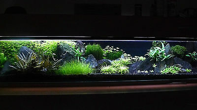 NATURAL BLACK AQUARIUM SUBSTRATE(SAND - GRAVEL 2-5mm) IDEAL FOR PLANTS 8