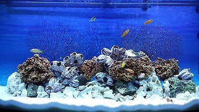 30 Kg White Dolomite Sand Gravel For Malawi Cichlid Tanganyika Aquarium,  Coral
