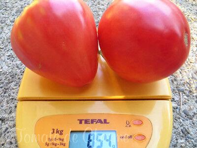 5+ graines de tomate bio Batyanya précoce productive délicieuse heirloom tomato 10