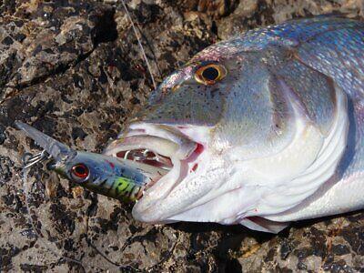 Savage Gear Deep Walker 2.0 17.5cm 70g Extra Fast Sinking Sea Lure Tuna NEW 2021