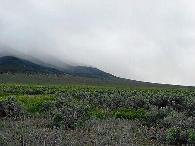 Rare 57 Acre Elko Nevada Ranch~Mountain Meadows Ranches! Cash Sale! No Reserve! 5