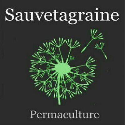 75 Graines de Basilic Méthode BIO plantes légumes jardin potager aromatique