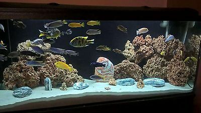 10 Kg Red Limestone Ocean Rock For Malawi Cichlid Aquarium Fish Tank Stones 2