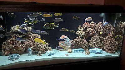 15 Kg  Natural Light Limestone Ocean Rock For Malawi Cichlid Aquarium Fish Tank 3