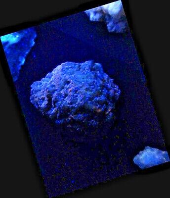"Minerales "" Bonitos Cristales Fluorescentes De Fluorita Mina Moscona - 10B17 "" 8"