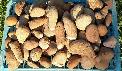 2 Kg Natural Chert Flint Round Stones for Decoration Knapping from the Holy Land