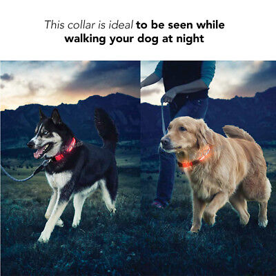 USB Rechargeable LED Dog Collar Nylon Glow Flashing Light Up Safety Pet Collars 5