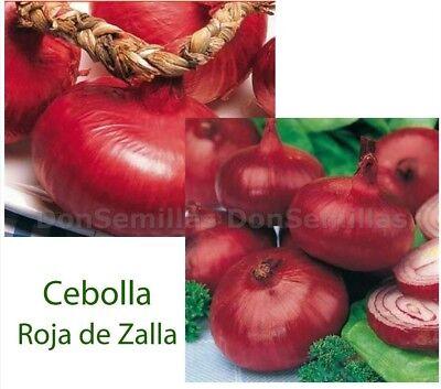 Cebolla Roja de Zalla ( 400 semillas ) seeds 2