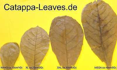100 Gramm Bruchlaub Seemandelbaumblätter - Catappa-Leaves - Wasseraufbereitung 2