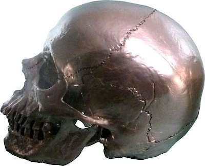 Human Skull white Replica Resin Model Medical Lifesize Realistic NEW 1:1 A3 TLU