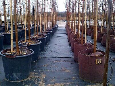 poignées 20 Root Pouch marron 56L Géotextile Smart grow Pot déco container