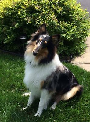"RedBarn 50 Naturals 5"" BULLY STICKS Dog Chews Treats Dental Grass Fed Case 4"