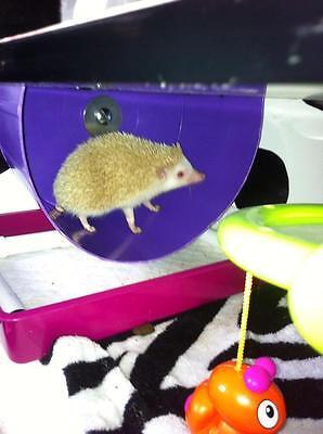 african pygmy hedgehog bucket exercise wheel degu small animals Wall Mountable 10