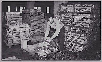 Caja Original Sin Abrir, Fabricada En La Década, 1920. 11