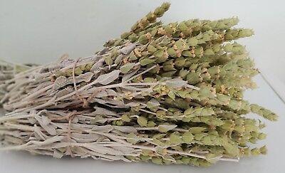 Griechischer Bergtee Sideritis Scardica Bio | 180g | Ernte 19 | Premium Qualität 12