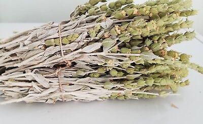 Griechischer Bergtee Sideritis Scardica Bio | 180g | Ernte 19 | Premium Qualität 8