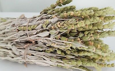 Griechischer Bergtee Sideritis Scardica Bio | 180g | Ernte 19 | Premium Qualität 11