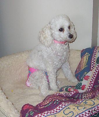 Original Female Dog Pet Diaper Panty House Potty Train Xs Yorkie