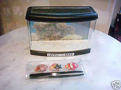 Aquarium mit 3 Dekofischen Fisch Fische Breite 21cm 2