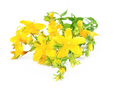 St Johns Wort Oil 100ml