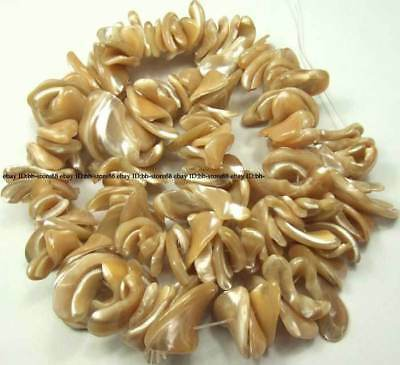 1x13-4x22mm Natural Pearl Shell Freeform Loose Beads 12