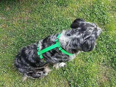 DOG HARNESS FIVE SIZES CHOICE OF COLOR Adjustable