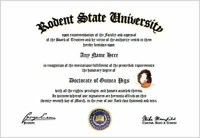 Guinea Pigs Diploma - Guinea Pig Lover Diploma