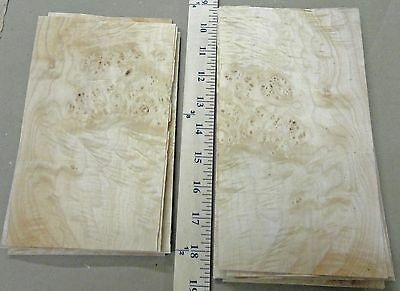 "Maple Cluster Burl wood veneer 5"" x 8"" raw no backing 1/42"" thickness ""A"" grade"