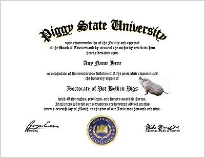 Pot Bellied Pigs Diploma - PIg Lover Certificate Unique Fun Gift