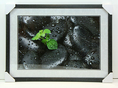 Professional Custom Framed Art - Photograph - Black Rock - Leaf w/ Droplets