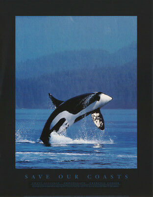 Poster: Animals : Save Our Coasts  - Whales - Free Shipping ! #gohf02 Rw15 H