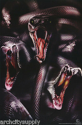 Poster : Animals :snakes               Free Shipping !      #3515    Lw20 K