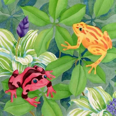 Colorful Rainforest Frogs - Yellow Red Green - ONLY $6 - Wallpaper Border B004
