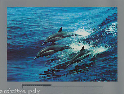 Poster : Animal : Celebration  - Dolphins  - Free Shipping !              Rw16 F