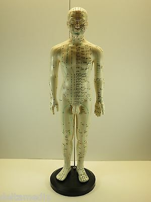 """Professional Educational Acupuncture 24"""" Male 60cm Anatomy Medical Model IT-106"""