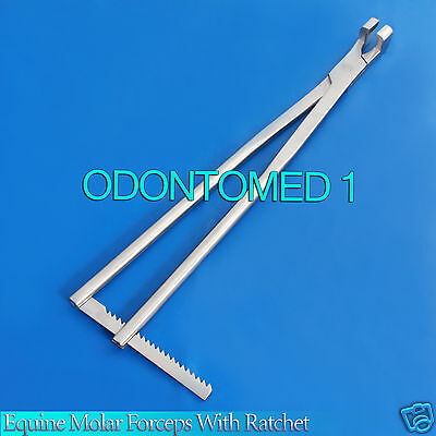 """Equine Molar Forceps 21"""" With Ratchet Veterinary Instruments ODM-V006"""