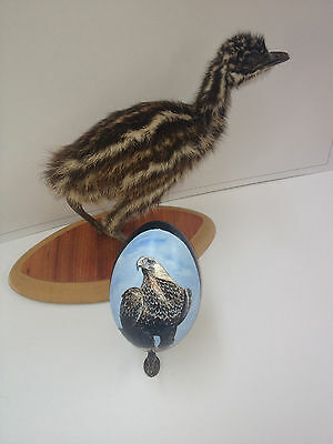 artist original Hand Painted eagle design Decorated Emu Egg.