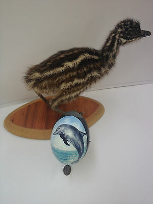 artist original Hand Painted dolphin design Decorated Emu Egg.