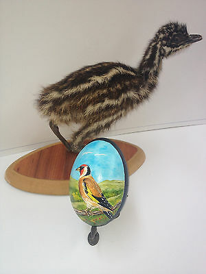 artist original Hand Painted bird design Decorated Emu Egg.