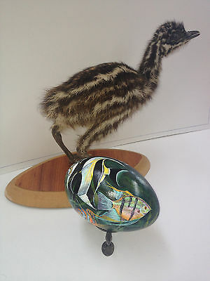 artist original Hand Painted tropical fish design Decorated Emu Egg.