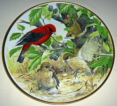 AJ RUDISILL Countryside Birds Audubon Society SCARLET TANAGER LEARN TO FLY Plate