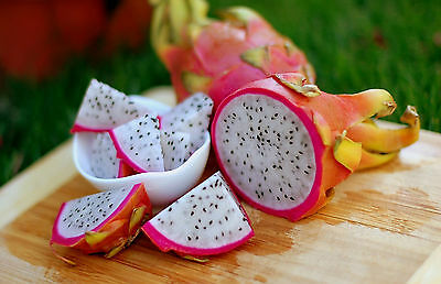 PITAYA  'Dragon Fruit' White flesh 30 seeds Exotic