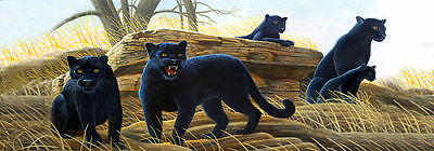 Panther # 3 - Rear Window Tint-Murals-Decals-Graphics