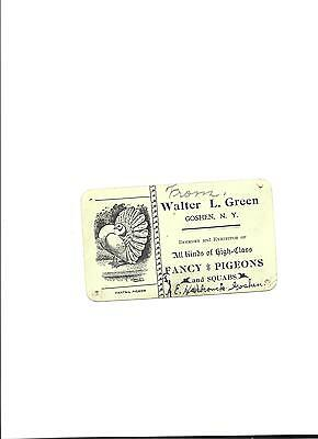 Fancy Pigeons and Squabs Walter L.Green Goshen, NY Delivery Tag Delivery Tag (g)