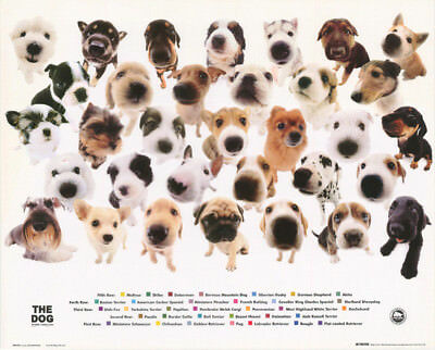 Small Poster :  The Dog - Collage   - Free Shipping  #mp0420  Rc9 Tl